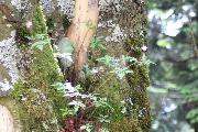 Natur - Pflanze im Baum